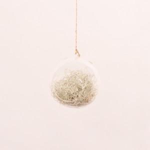 Usneoides + palla